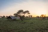 Zeltsafari Serengeti Morgenstimmung 2017-2-2