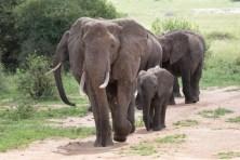 Elefanten Tarangirei 2017-5-2