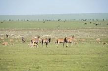 Elenantilopen Ngorongoro 2017-1-2