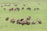 Sperbergeier-Ngorongoro-2017-4-2