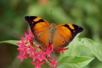 Butterfly_Garden_Moodbidri_Belavi7