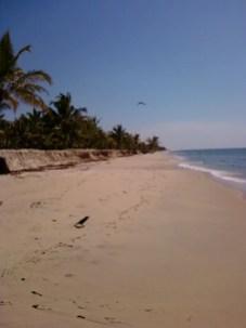 Thannirbhavi-beach7