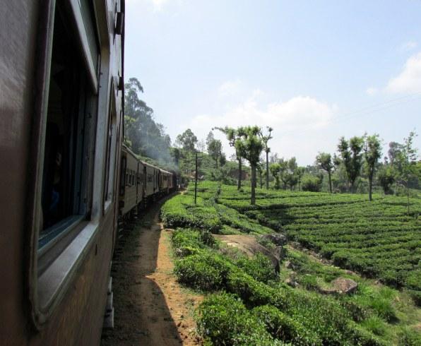 Teaültetvények között kanyarog az út
