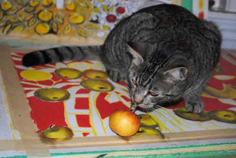 Leo loves Apples