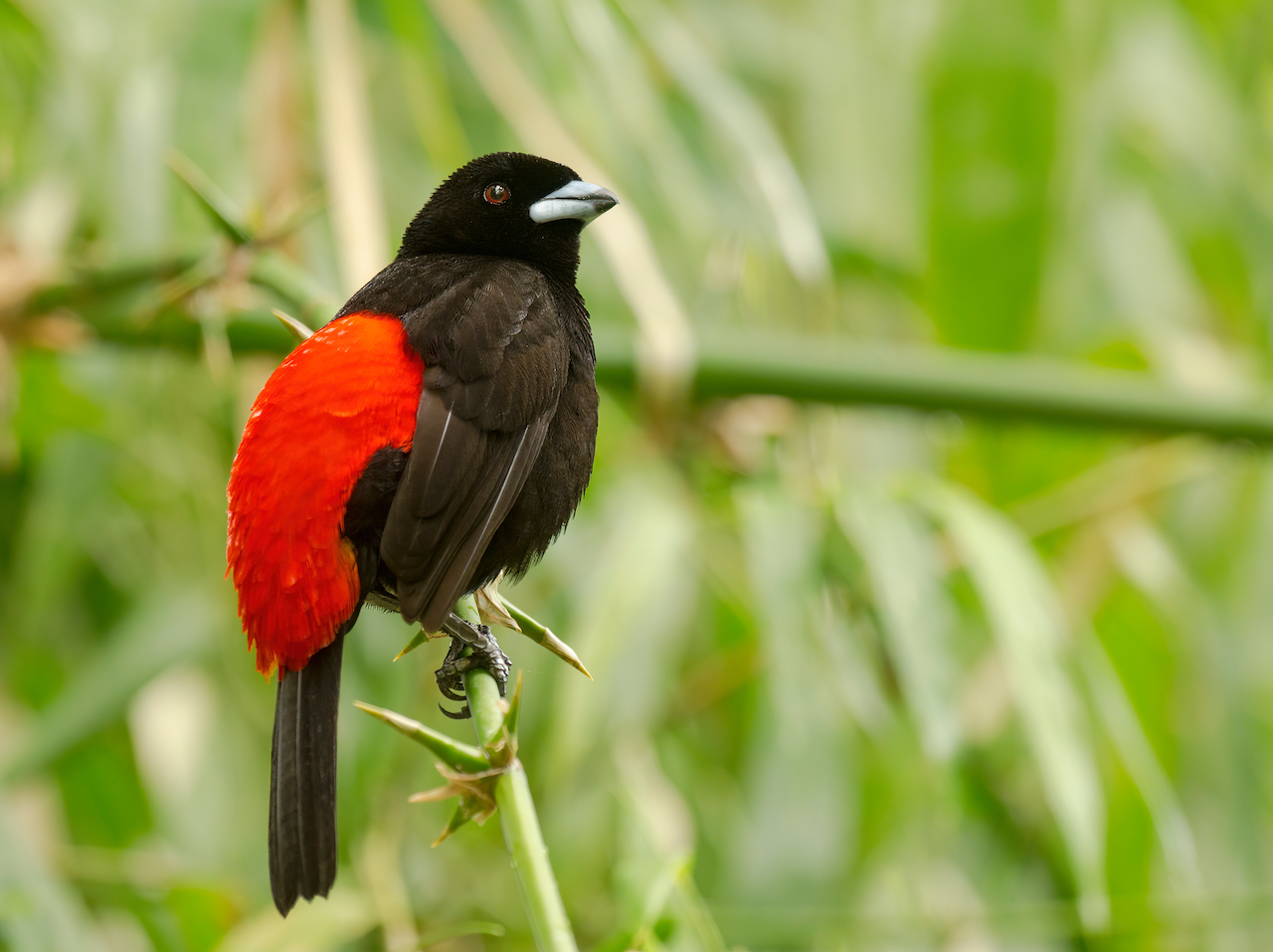 Carara National Park: one of the most important sites for birdwatching Costa Rica.