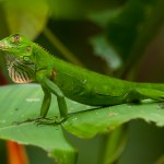 Manuel Antonio National Park is home to more than 352 species of birds, beaches and a wide variety of flora and fauna