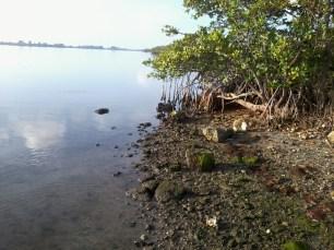 low tide (4)