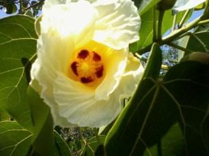 tree flowers (2)