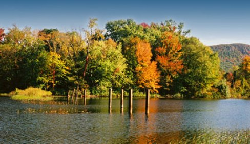 pond-fall