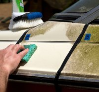 get mold out of boat carpet - Home The Honoroak