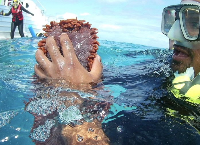 A guide in the Great Barrier Reef shows off a sea cucumber.