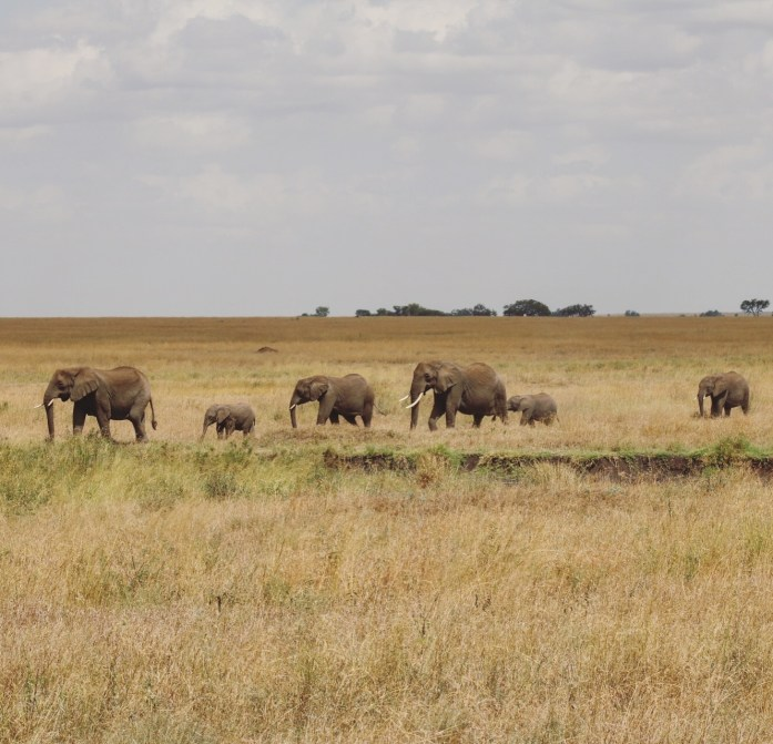 During the summer months, you can see the Great Migration while on safari through Kenya and Tanzania.