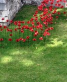Poppy_detail_Tower_of_London