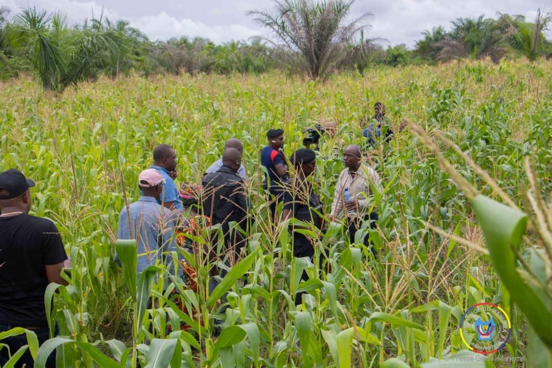 Week-end agricole : le Gouverneur Musafiri visite son champs de 7 hectares