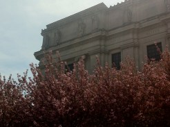Here are some beautiful cherry blossoms in front of the museum.