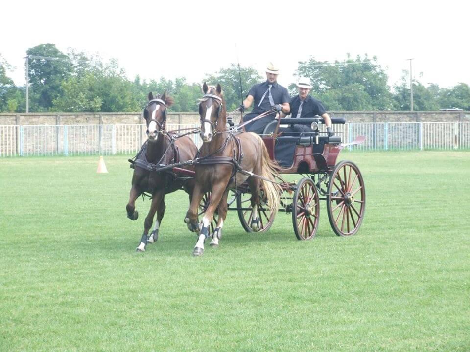 13. Smotra paradnih konja i fijakera