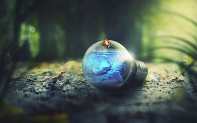 Le biomimétisme : des savoirs naturels inspirants