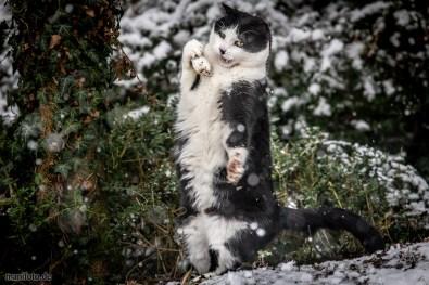 schneeballschlacht mit tom dem schneekater am 31.1.2019