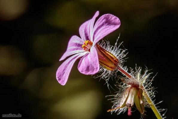 25. April: frühe Blüten im Garten