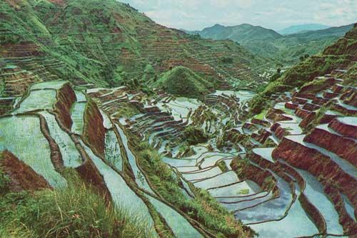 rice_terraces