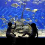 Manila For Kids @ Manila Ocean Park