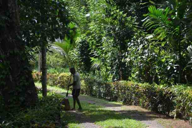 Cleaning and gardening in Plantation Villa Resort in Kalutara. maninio.com #resortsrilanka #villaresort