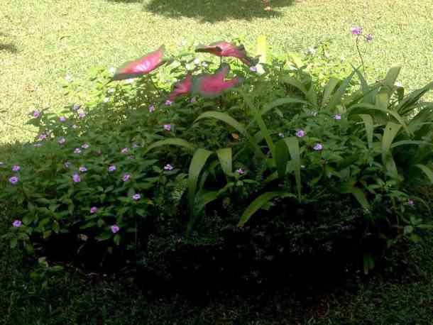 Gardens in Plantation Villa Resort in Kalutara-Sri Lanka. maninio.com #resortsrilanka #villaresort