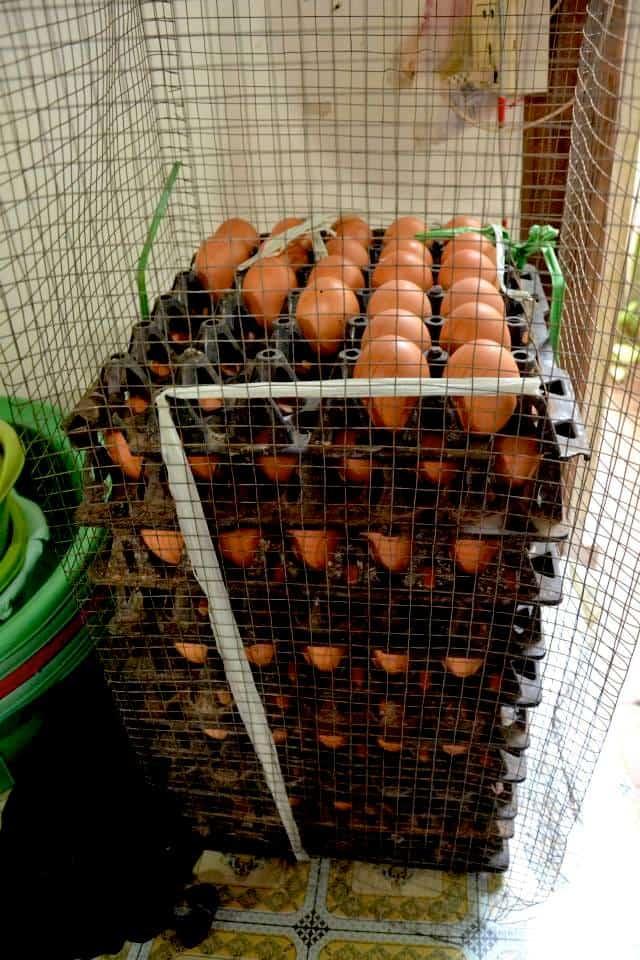 Φρέσκα αυγά στην Καμπότζη- #volunteercambodia #εθελοντισμόςασία maninio.com