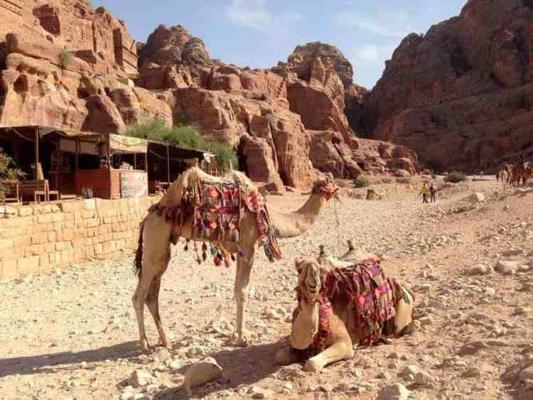 Petra Jewel of Jordan - maninio.com - Jordan wonders - Camels