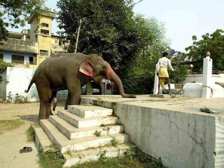 Βαρανάσι, Ανάμεσα στην ζωή & στον θάνατο. EΕλέφαντες εν δράση. maninio.com