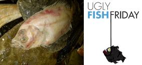 Ugly Fish Friday