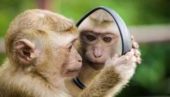 closeup photo of primate