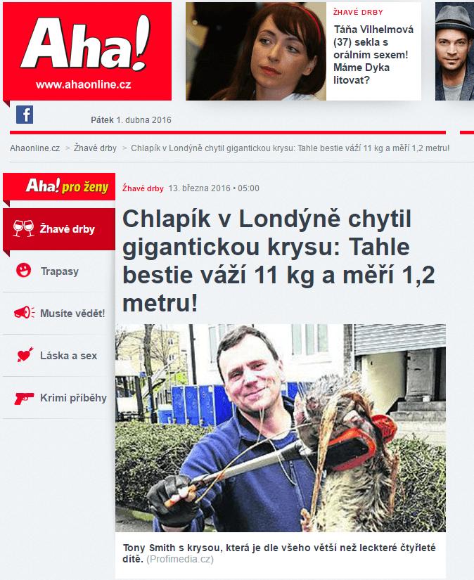 Chlapík v Londýně chytil gigantickou krysu Tahle bestie váží 11 kg a měří 1 2 metru Ahaonline.cz