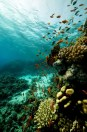 808a6shutterstock_66627748--Baliklar,-mercan-ve-okyanus