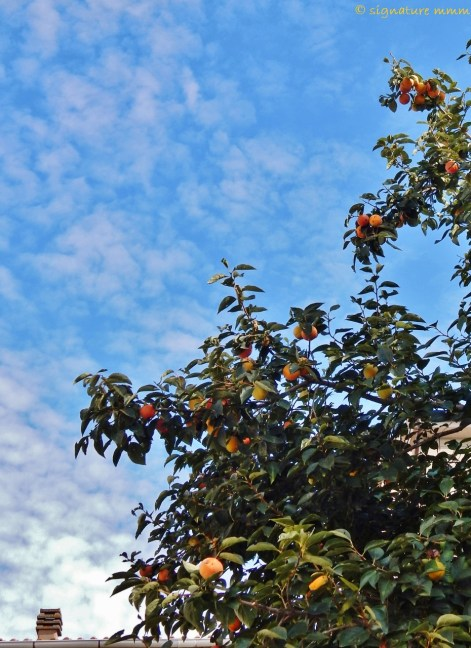 First thing I saw upon exiting the museum: oranges and blue sky.