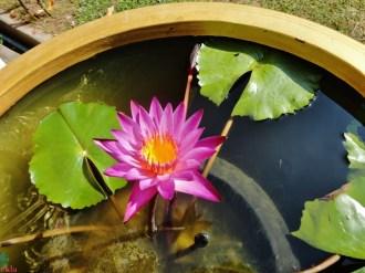 Little pond.