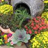 desktop fall flower garden ideas of ideas mobile phones high quality nursery