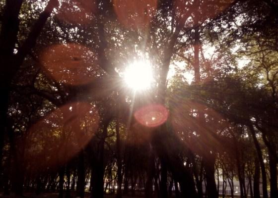 God - light through the trees