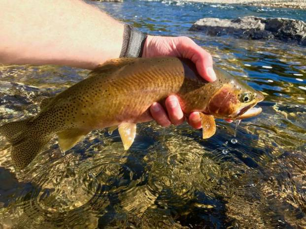 This photo shows a cutthroat trout.