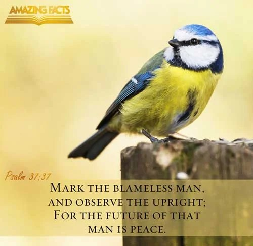 Psalms 37:37 - This Scripture Picture is provided courtesy of Amazing Facts. Visit us at www.amazingfacts.org