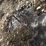 Pebble stones @ Setagayapark, Vienna