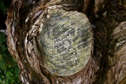 Layers of bark and inscriptions
