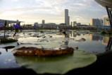 Skyline Singapore, Lily Pond at Art Science Museum