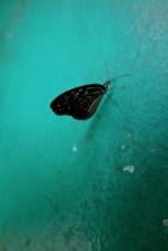 Mint wall, Butterfly Park Kuala Lumpur