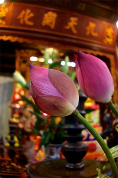 Lotus @ Ngoc Son Temple
