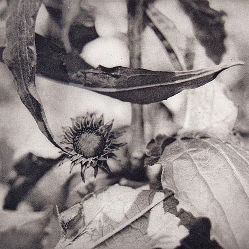 Manneken Press Jonathan Higgins photogravures