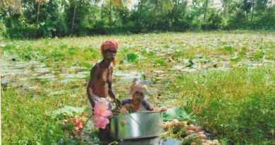 അരവിന്ദാക്ഷന്റെ താമരക്കൃഷി, താറുമാറാക്കിയ വേനല്ക്കാലം