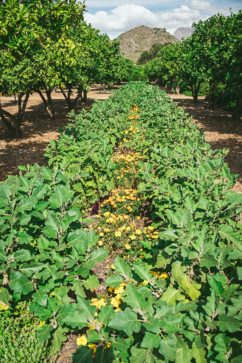 Babylonstoren Cape Dutch Farm Plants