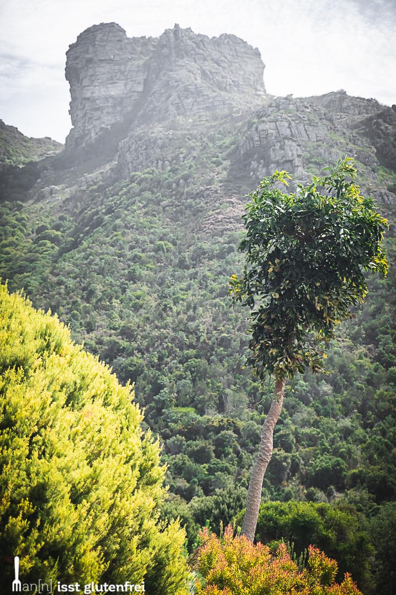 Kirstenbosch National Botanical Garden Aussicht