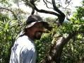 Sebastian Climbing koa